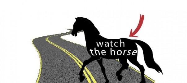 wwatch_the_horse